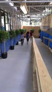 Drexel plants 2