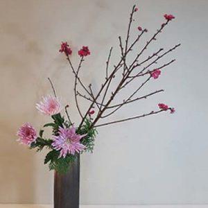 ikebana pink crysanthemums