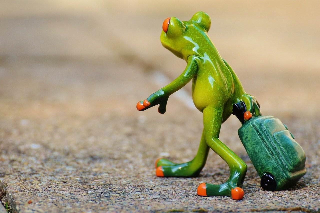 frog, farewell, travel