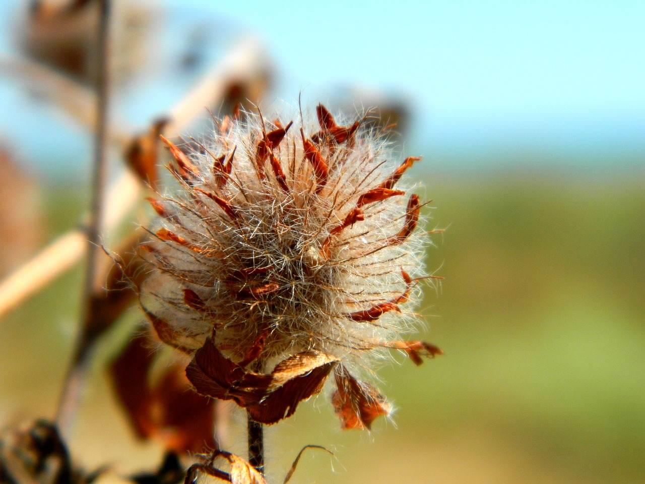 ikebana, dry flower, flower