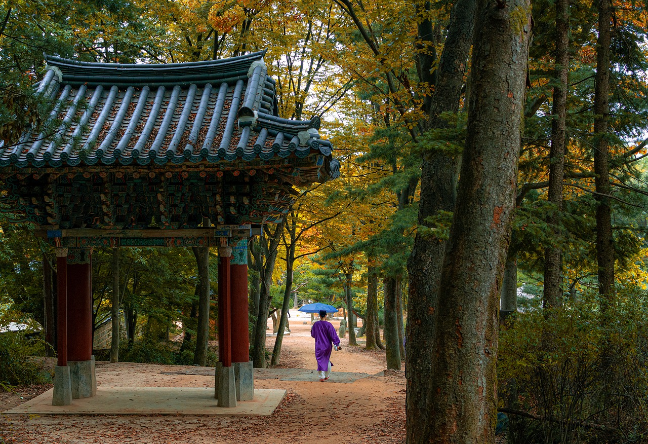 korean folk village, forest, trees