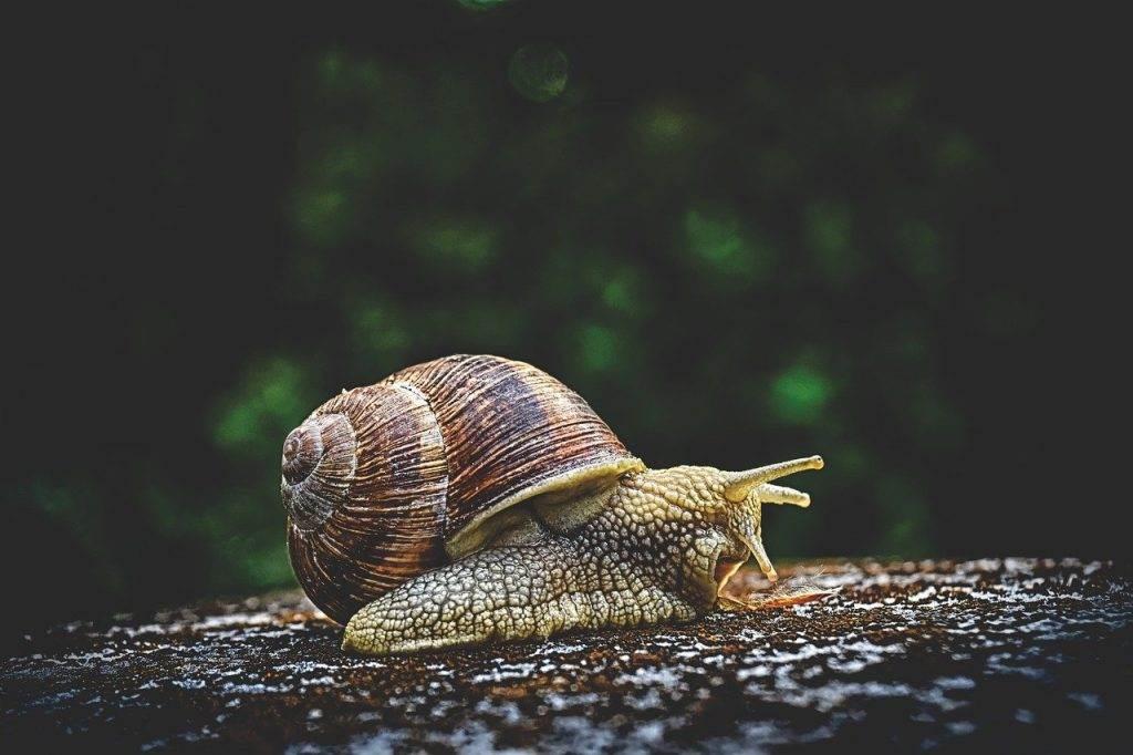 snail, animal, house